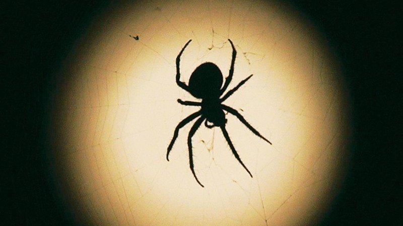 Elle appelle la police pour... une araignée