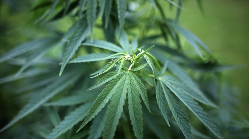 Le cannabis à usage thérapeutique sera bientôt légal au Luxembourg