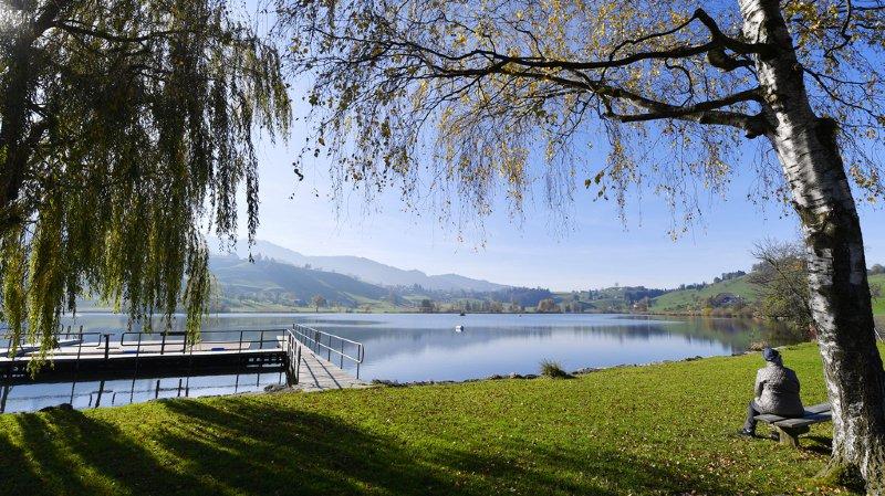 Réchauffement climatique: dans les lacs suisses, les algues bleues laissent place à des espèces toxiques