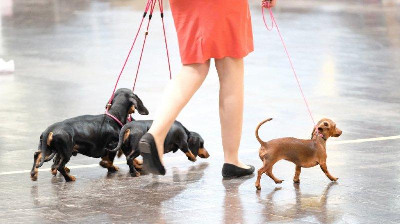 Les procédures pénales relatives à la protection des animaux atteignent un record en Suisse