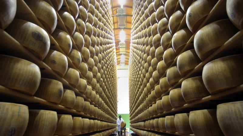 Italie: les vaches qui produisent le lait du Parmesan et du Grana Padano sont maltraitées