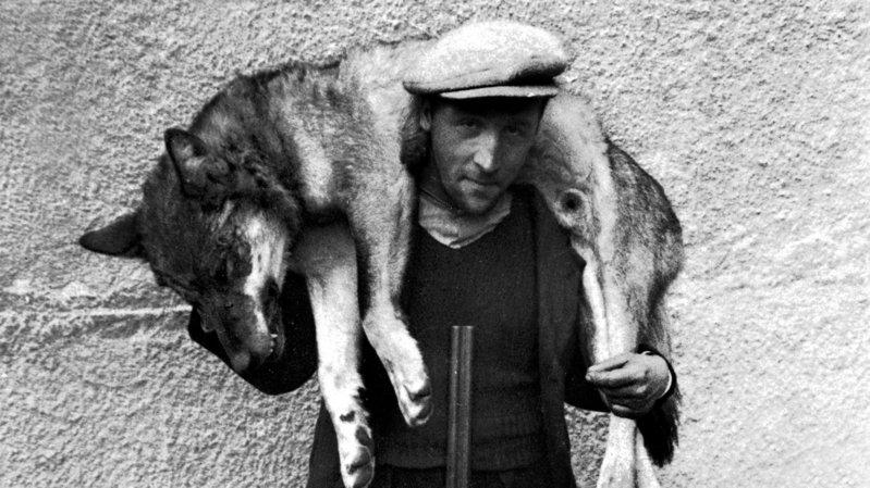 Histoire du loup: de la prime au chasseur aux chasseurs de prime