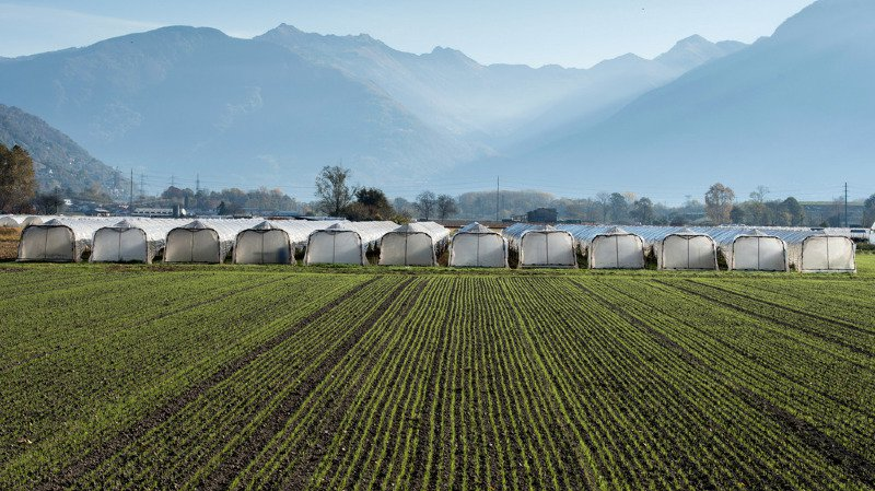L'initiative d'Uniterre pour une agriculture biologique a été rejetée par le National
