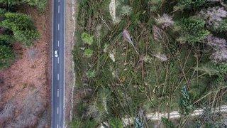 Tempête: Eleanor a mis au sol 1,3 million de m3 de bois