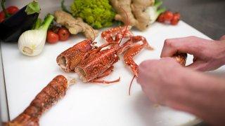 Plonger un homard vivant dans l'eau bouillante: fini!