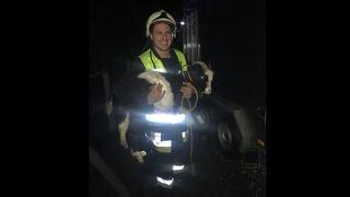 Intempéries: un bouc et trois chèvres évacués par les pompiers de Saint-Léonard