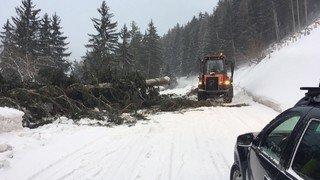 La tempête Evi provoque des chutes d'arbres et bloque des routes à Finhaut et à Nendaz