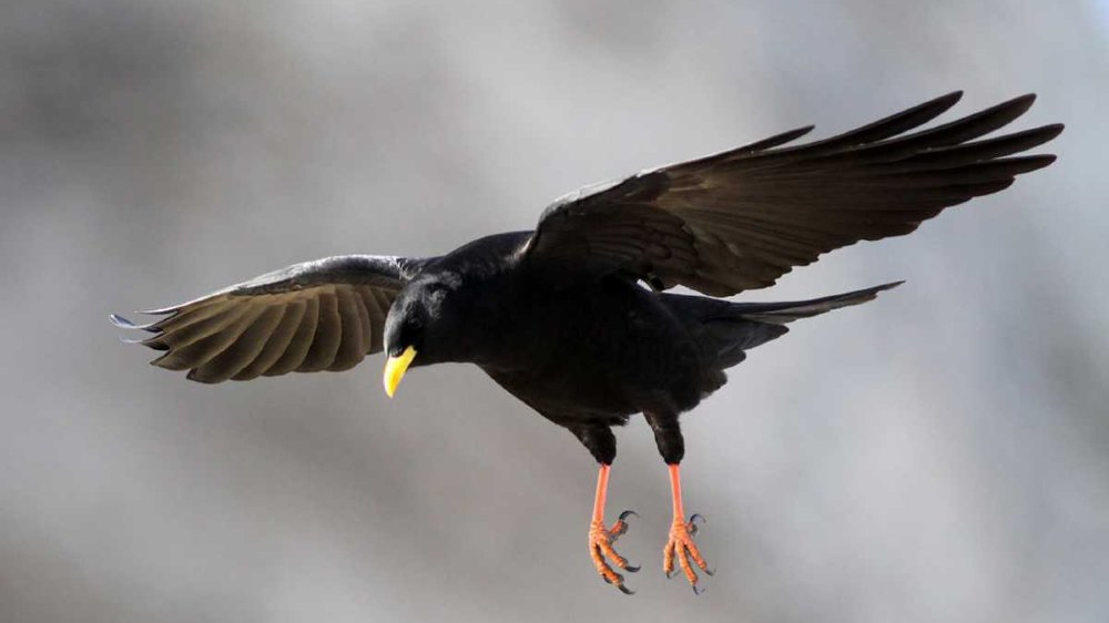 Condamné pour avoir  abattu 21 oiseaux protégés