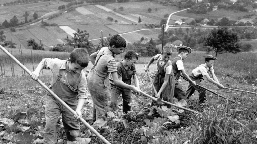 Sur les 716 personnes placées de force entre 1950 et 1980, se trouvent de nombreux enfants qui ont été exploités.