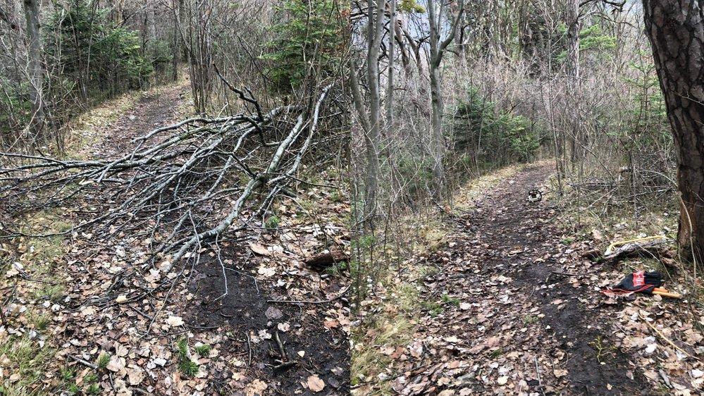 Un tronçon a été nettoyé à Lavey