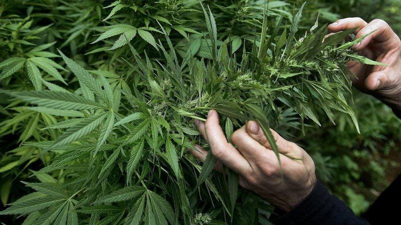 La Grèce se lance dans le cannabis thérapeutique