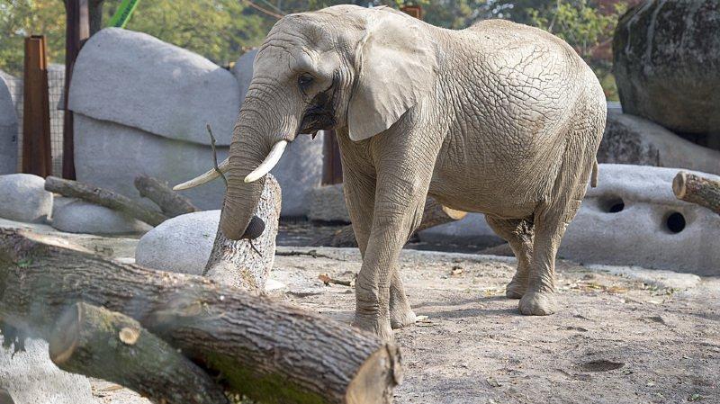 Météo: les zoos prennent des mesures contre le froid pour protéger les animaux exotiques