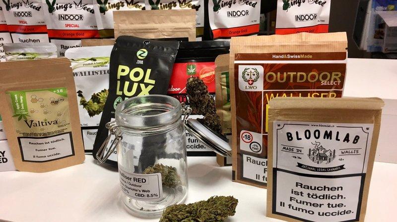 Le cannabis valaisan prend racine sur le marché légal