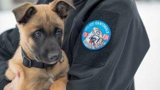 Gax et Grimm, les futurs super-flics de la police cantonale