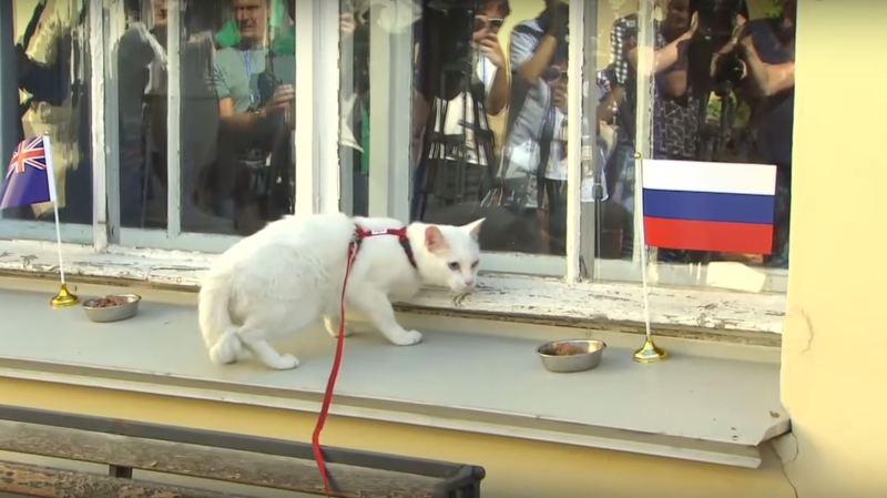 Le chat Achille avait déjà officié lors de la dernière Coupe des Confédérations en juin 2017.