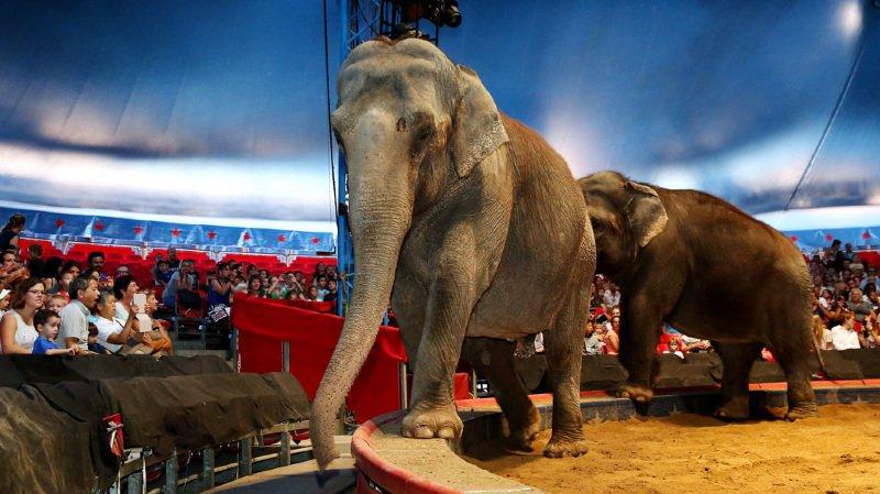 Espagne: un éléphant tué dans l'accident d'un camion de cirque