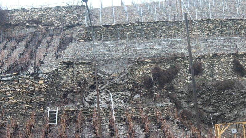 Les vignobles ont été fortement affectés par ces intempéries.