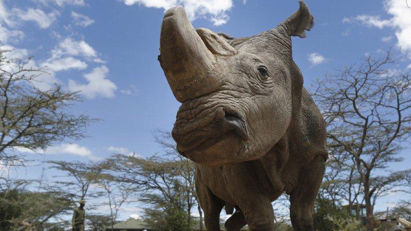Le décès de Sudan est synonyme de l'extinction de sa sous-espèce.