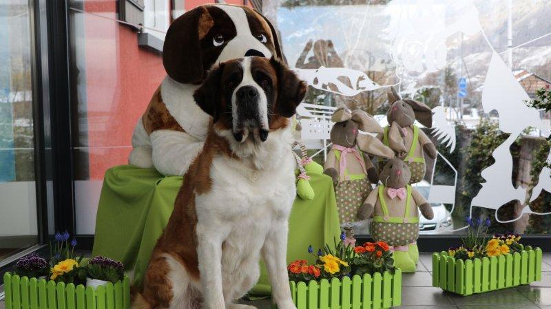 Les chiens du Saint-Bernard attendent les visiteurs au Barryland le lundi de Pâques.