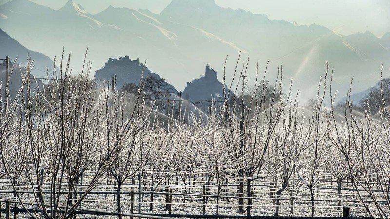 La lutte contre le gel et l'aspersion d'abricotiers ont commencé à reblanchir la Plaine du Rhône