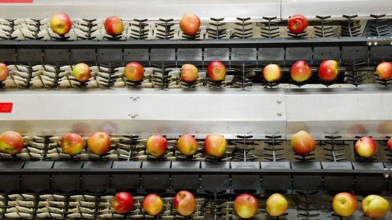 Les stocks de pommes et de poires du pays sur le point d'être épuisés