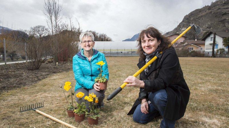 Sion va accueillir son premier jardin communautaire dans le quartier de Châteauneuf
