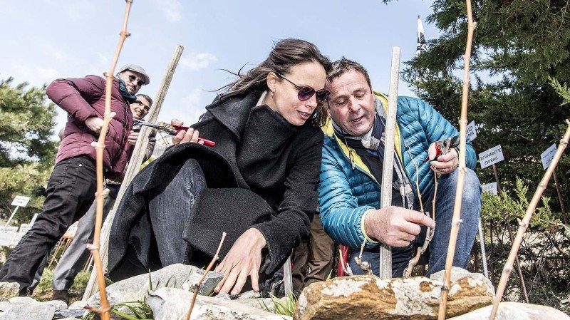Saillon: Bérénice Bejo et d'autres stars du cinéma ont taillé la vigne à Farinet