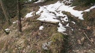 Tout un pan de forêt s'est effondré cet hiver près de Thoune