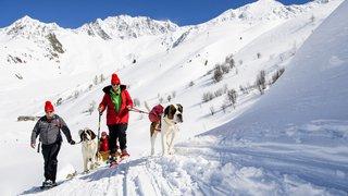 Hospice: sortie exceptionnelle pour les chiens saint-bernard