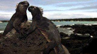 Galapagos: 22 tonnes de déchets ramassés sur les côtes