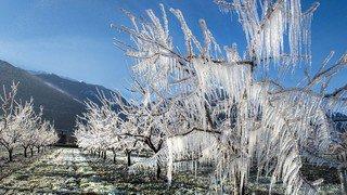 Châteauneuf: lutte antigel à l'Office de l'arboriculture