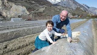 En Valais, ce sont les asperges blanches pleine terre qui se pointent