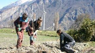 Martigny: des buissons indigènes remplacent les thuyas pour favoriser la biodiversité