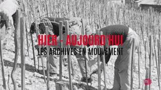 HIER-AUJOURDHUI 15 le travail de la vigne