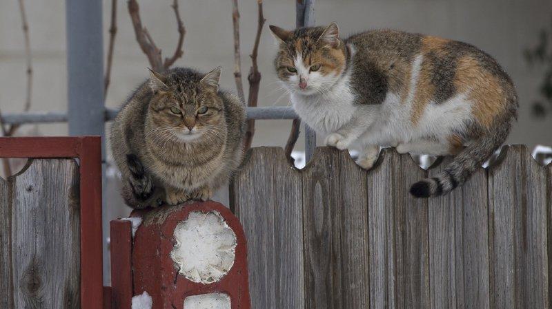 Plusieurs chats ont été intoxiqués à Bramois ces derniers jours.