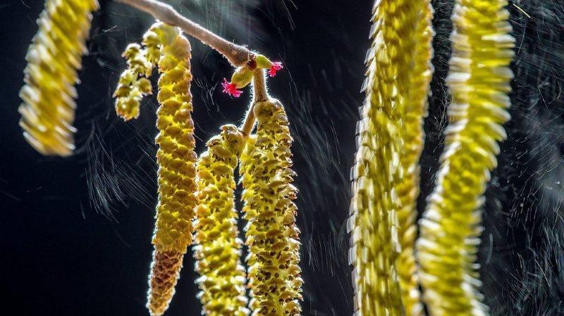 Météo: semaine éprouvante pour les personnes allergiques aux pollens