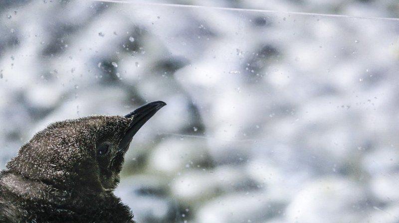 Des centaines de milliers d'oiseaux meurent à cause des collisions contre des vitres, comment les éviter?
