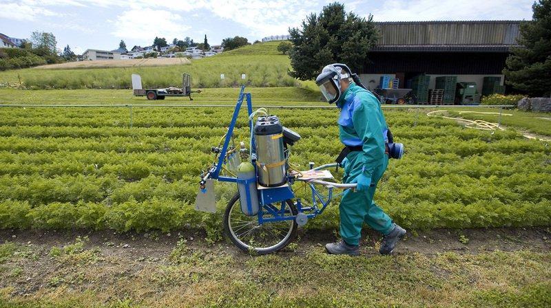L'usage des pesticides sera-t-il interdit en Suisse?