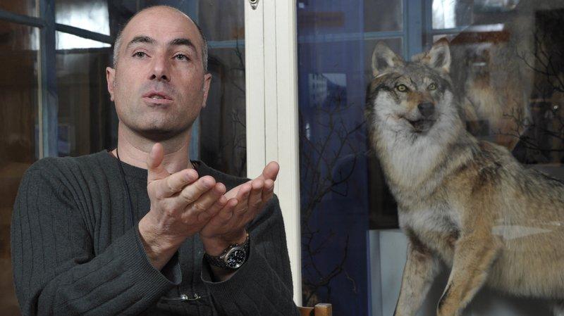 Grand Conseil valaisan: «Parler d'hybrides entre chien et loup est un non-sens biologique»