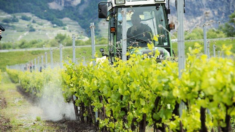 Le Domaine du Grand Brûlé à Leytron va servir de site pour les essais en matière de viticulture et d'œnologie.