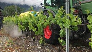 Le Valais teste une machine qui gicle de l'eau à très haute pression pour tuer les mauvaises herbes