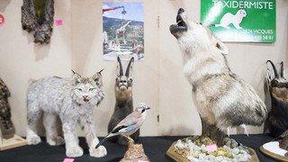 Valais: les chasseurs tessinois au prochain salon Passion Nature de Martigny
