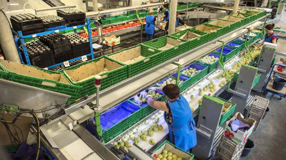 Les collaborateurs de la centrale d'Union-Fruits à Charrat lavent, trient et emballent les dernières pommes d'importation en attendant l'arrivée des premières valaisannes du millésime 2018 d'ici à la fin juillet.