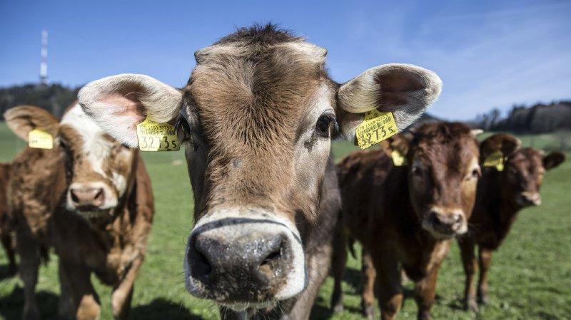 Agriculture: les ventes d'antibiotiques pour animaux sont en baisse