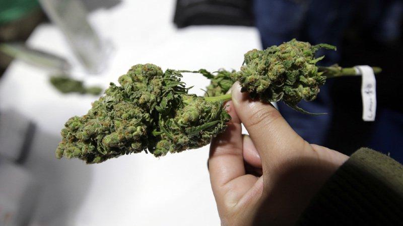 Canada: un pas de plus vers la légalisation du cannabis récréatif