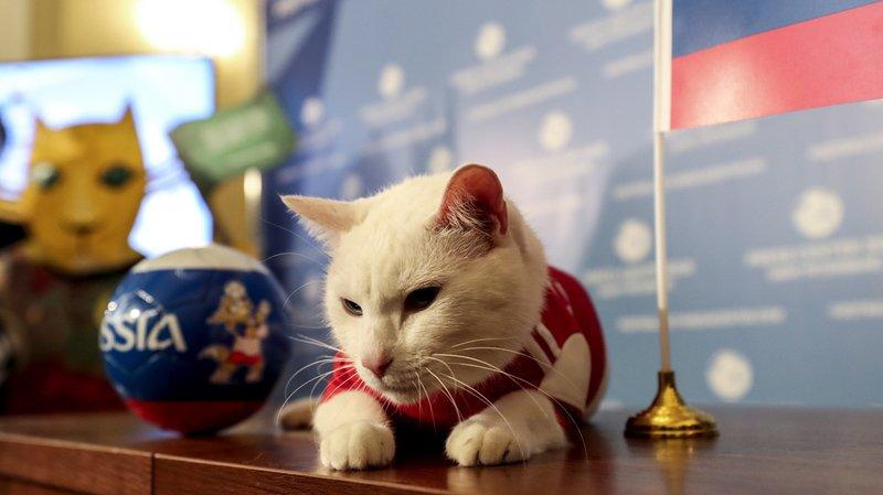 Coupe du monde 2018: Achille le Chat voit la Russie gagner jeudi contre l'Arabie saoudite