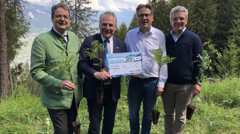 Vendredi à Veysonnaz, la compagnie Helvetia Assurances a offert 10'000 arbres au canton du Valais.
