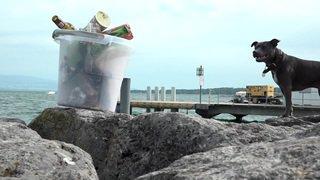 Près de 1000 bénévoles nettoient les rives du lac Léman