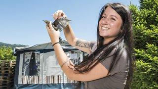 Ayent: l'association Nouvel Envol ouvre le premier centre de soins pour oiseaux sauvages du canton
