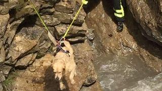 Conthey: les pompiers à la rescousse d'un chien tombé dans la Morge